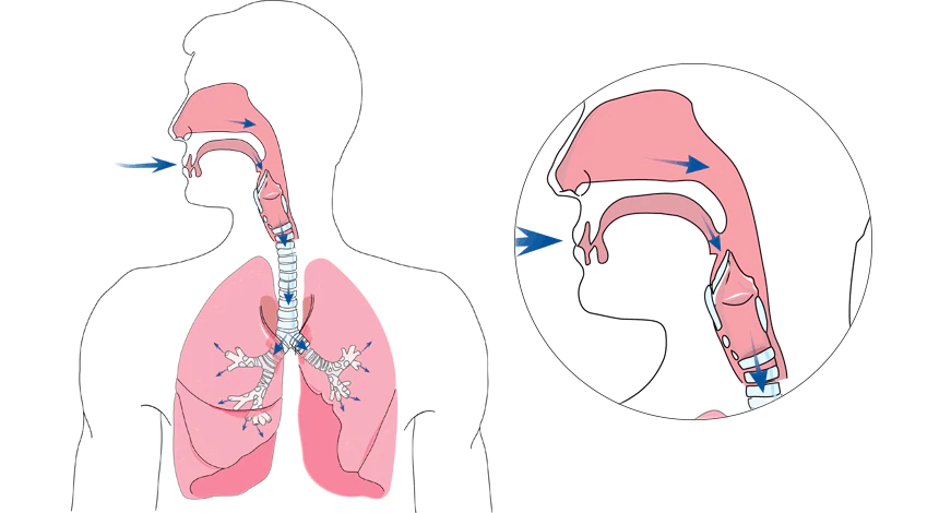 What Happens During Normal Breathing?